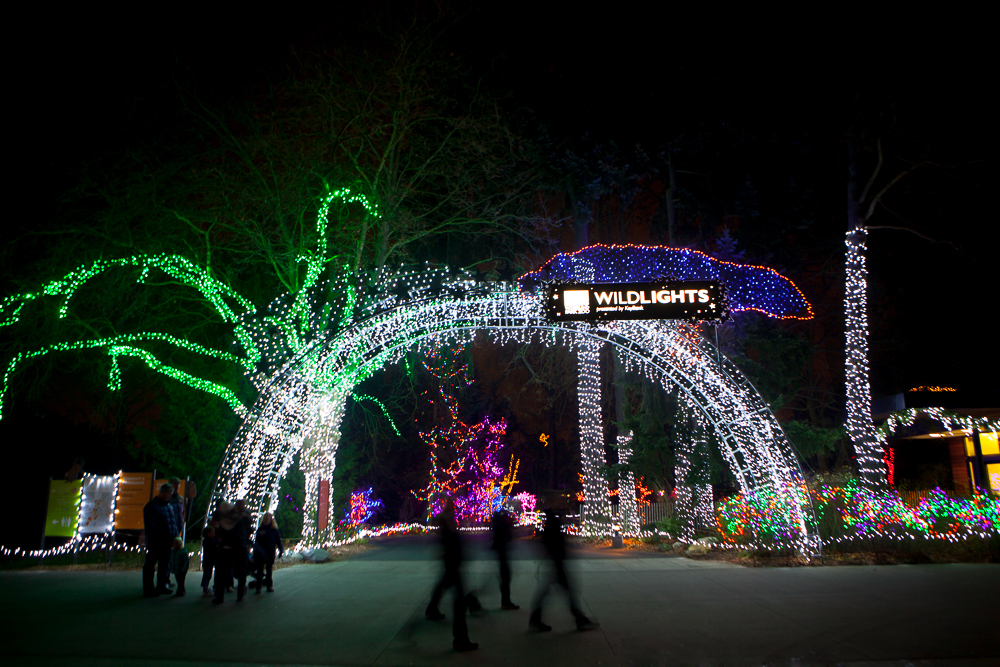 Zoo Lights Plan A Nighttime Family Adventure For The