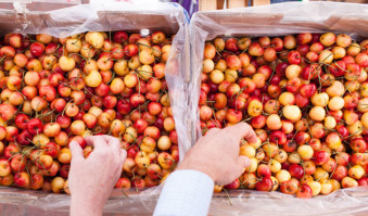 Farmers Market Week Rainier cherries